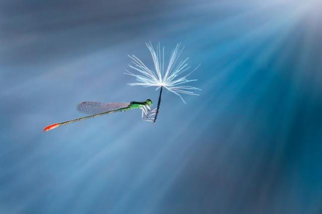 http://amuze.ru/wp-content/uploads/2014/07/1398624547_nature_s-jetpacks-photography-by-nordin-seruyan-1_1.jpg