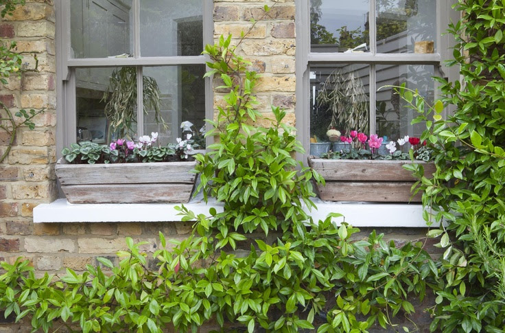 Leopoldina Haynes' garden, grey window