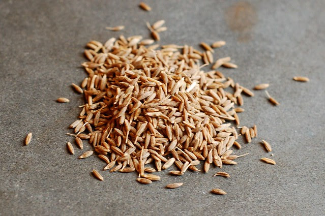 Cumin Seeds by Eve Fox, Garden of Eating blog, copyright 2011