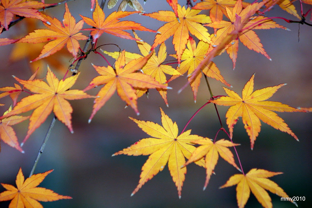 un poco más de otoño 25-11-2010 18-36-39