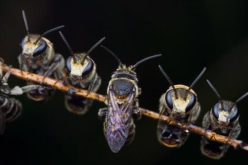 A bunch of sleeping bees I don't like to sleep alone.............IMG_8889 copy