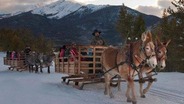 Two Below Zero dinner sleigh ride