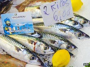 mackerel on the counter