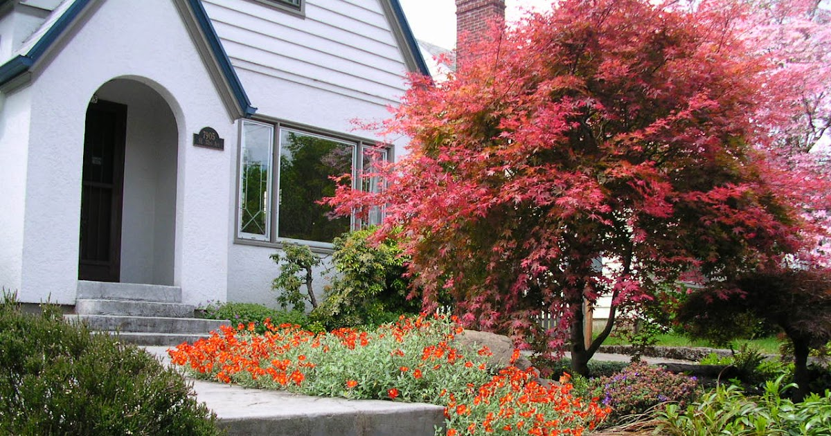 My landscaping collection front lawn landscaping ideas - Punch home landscape design pro 17 5 crack ...