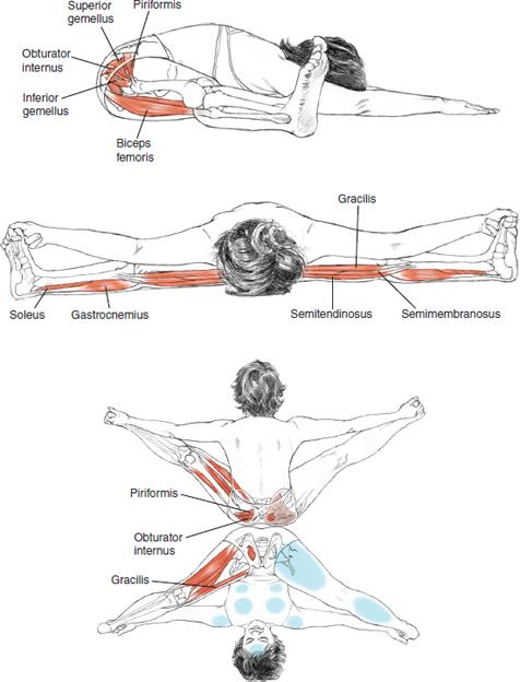 Upavistha Konasana Seated Wide-Angle Pose © Leslie Kaminoff's Yoga Anatomy  B E N E F I T S — Stretches the insides and backs of the legs — Stimulates the abdominal organs — Strengthens the spine — Calms the brain — Releases groins  ❤ Yoga Inspiration Buy the book here http://amzn.to/1ctMdtp Like Yoga Inspiration on Facebook http://www.facebook.com/pages/p/265946723498660