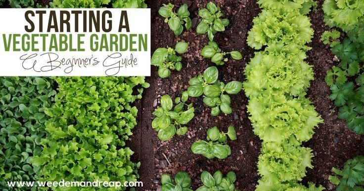 Starting a small backyard vegetable garden