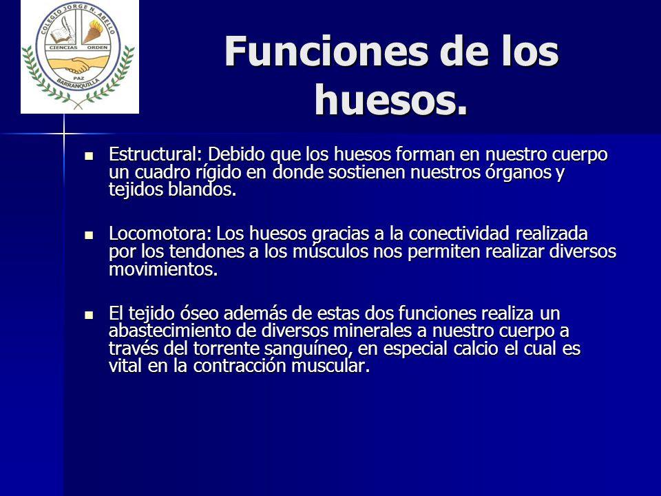 Funciones+de+los+huesos