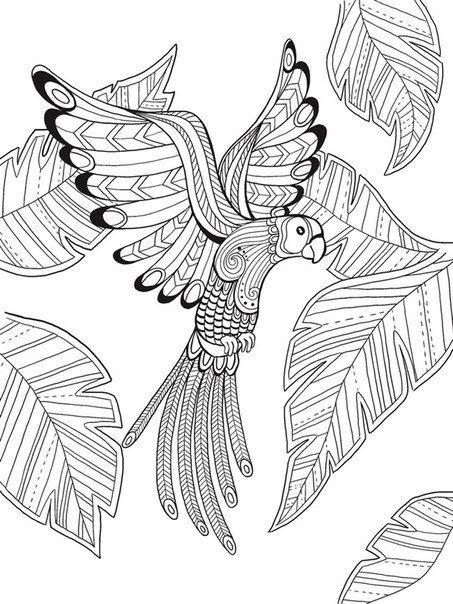 ausmalbilder tiere vogel  aiquruguay