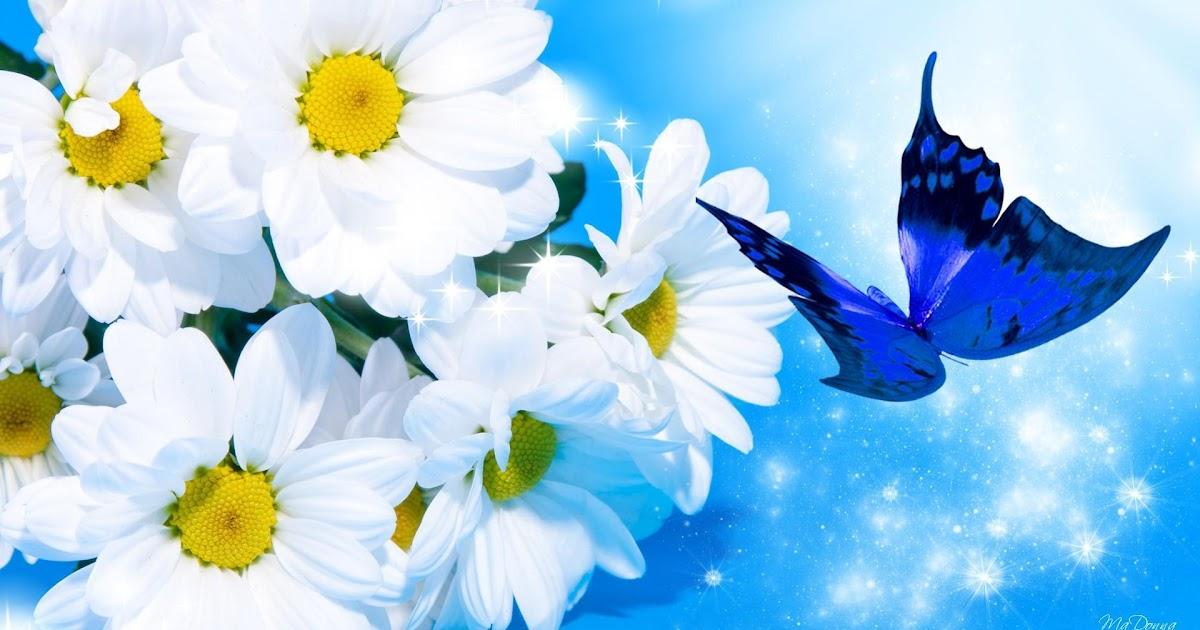 76 Background Bunga Biru