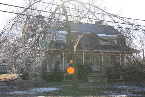 Tree split in half