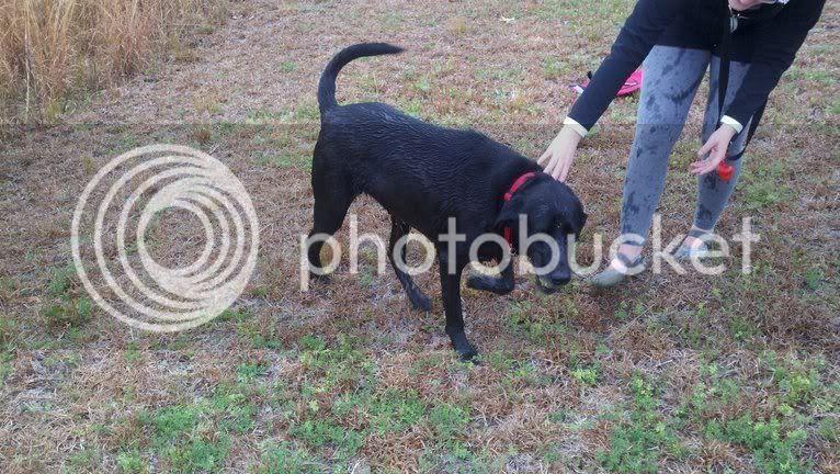 My Dog Shook Her Upper Body Like A Mini Seizure
