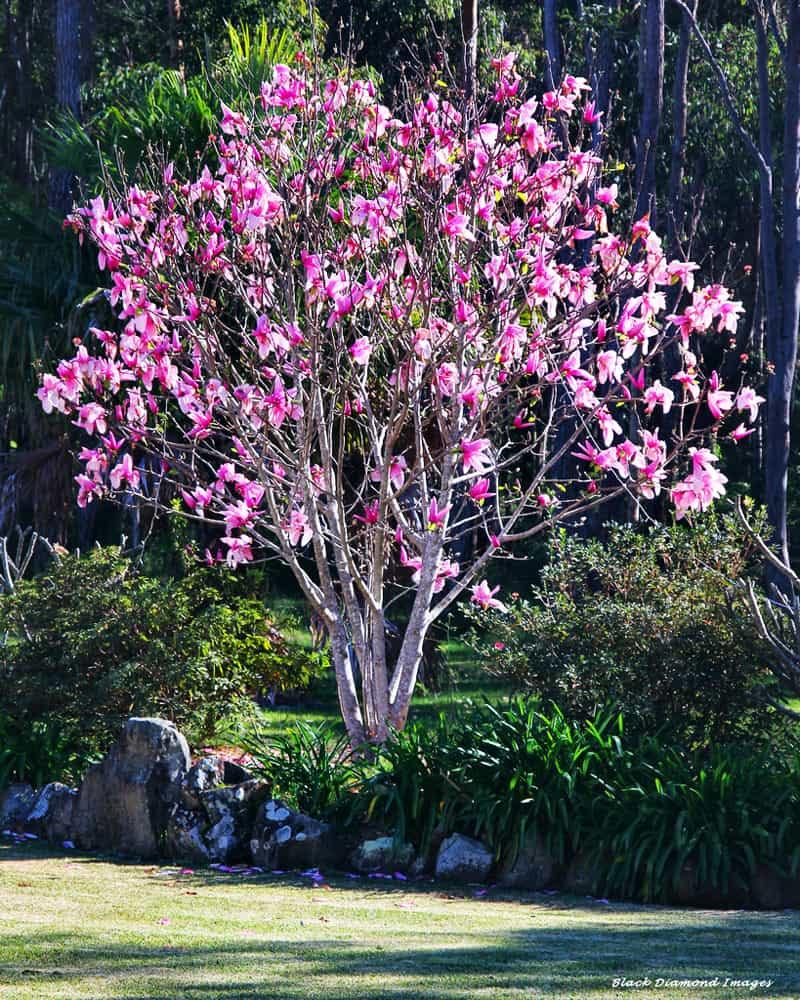 magnolia tree_designrulz 30