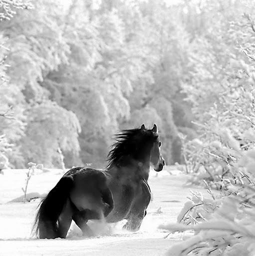 Black And White Photography Afbeeldingen Black And White Horse