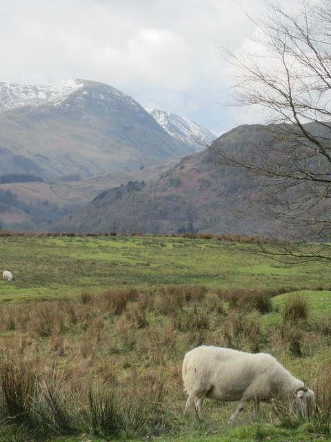 Lake District April 2012 (89)