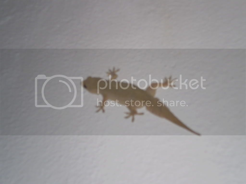 lizard Pictures, Images and Photos