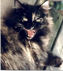 Devil Cat! by hugsRgood