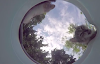 Coloca una cámara en un tazón de agua para animales callejeros y el video da la vuelta al mundo