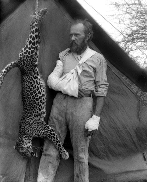 During an expedition to Africa Ackley came across a wild leopard.  Leopard attacked the man.  Ackley same reason did not shoot him, although he had a rifle with him was.  It seemed to end, but Ackley kept his head: his left hand he grabbed a leopard by the throat and shoved to the right in the mouth.  Ackley, ignoring the pain, pushed his hand deeper and deeper into the throat of the beast, until he began to choke, and in the end he managed to win a predator.
