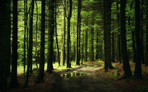 forest background images wallpaper cave