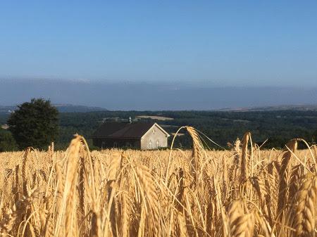 harvestchapel2.jpg