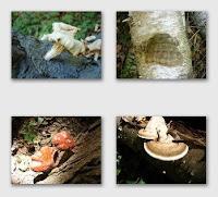 Fungi at Presqu'ile Park