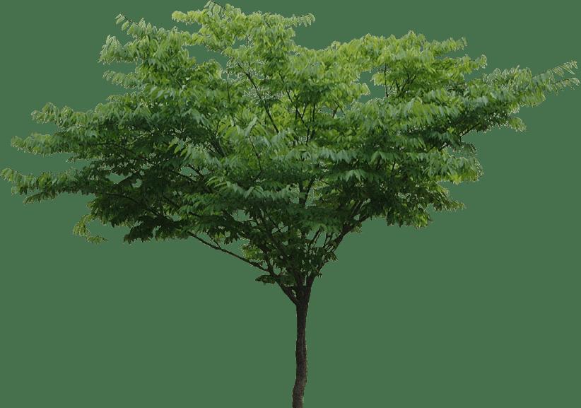 Tree PNG File