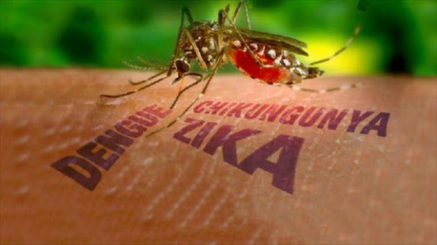 Resultado de imagen para virus del zika