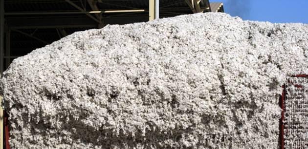 Παράταση για την παράδοση συσπόρου βαμβακιού σε εκκοκκιστικές επιχειρήσεις