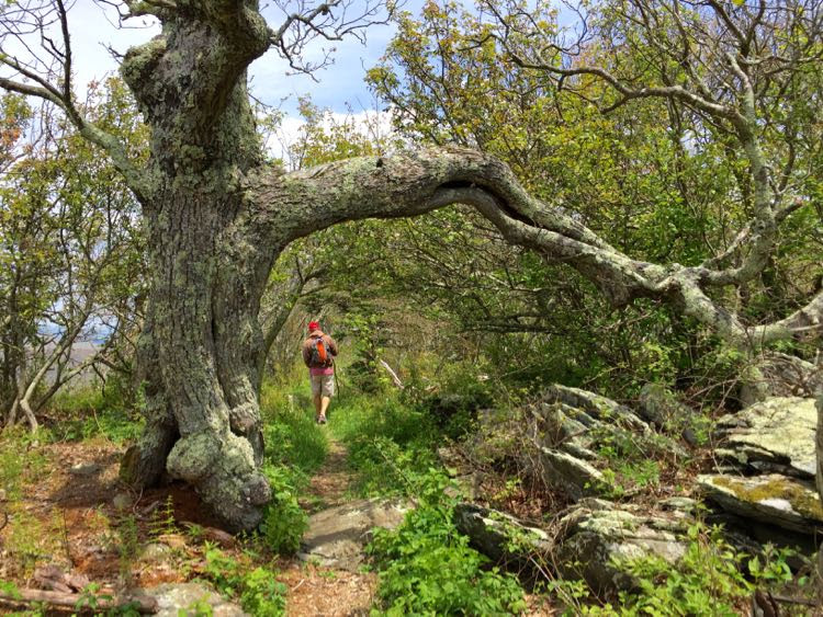Tackle the Hawksbill trail on a Shenandoah National Park day trip