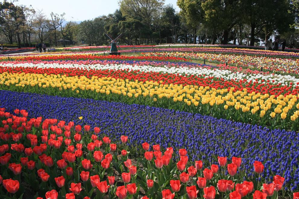 Τουλίπες σε Kiso Sansen Εθνικό Πάρκο Κυβέρνηση, Ιαπωνία