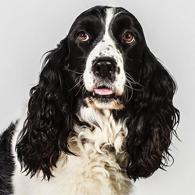 Retratos de cães cheios de personalidade 04