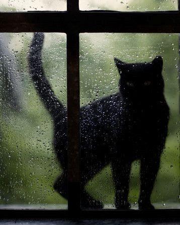 black-cat12