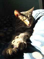 Maggie sunning on her tuffet