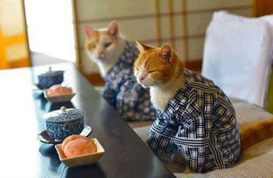 tea ceremony tokyo