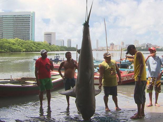 Tubarão capturado é considerado de grande porte. (Foto: Reprodução / TV Globo)