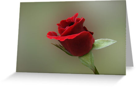redrosecard