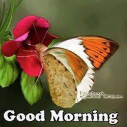 Good Morning Butterfly In Flower Commentphotoscom English