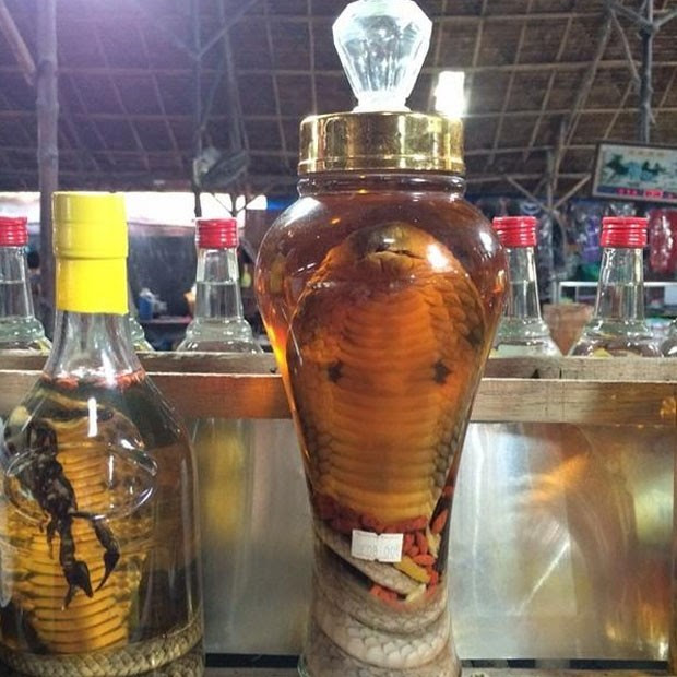 Resultado de imagem para vinho de cobra