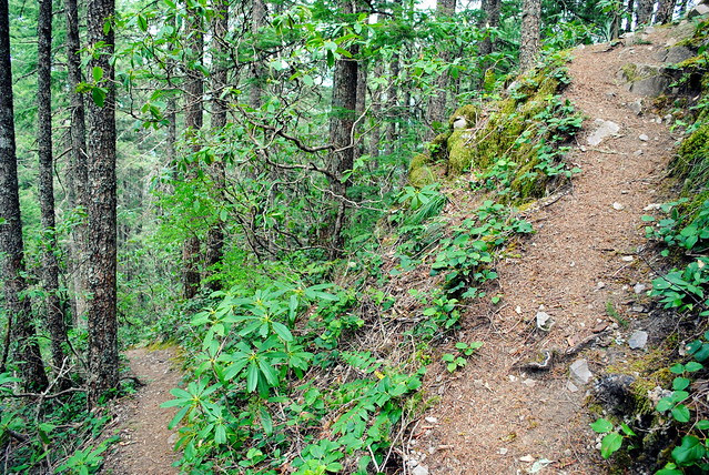 Hunchback Mountain Trail #793 - Mt. Hood National Forest