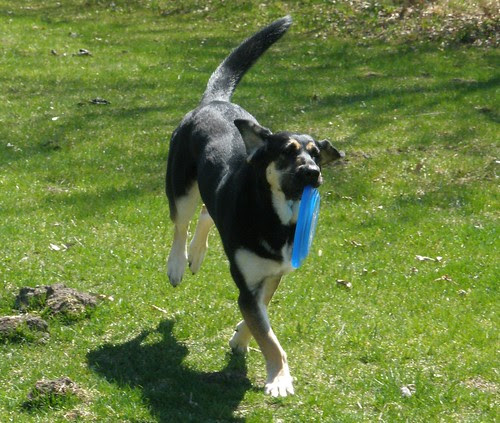 Gretel Hopping with Frisbee