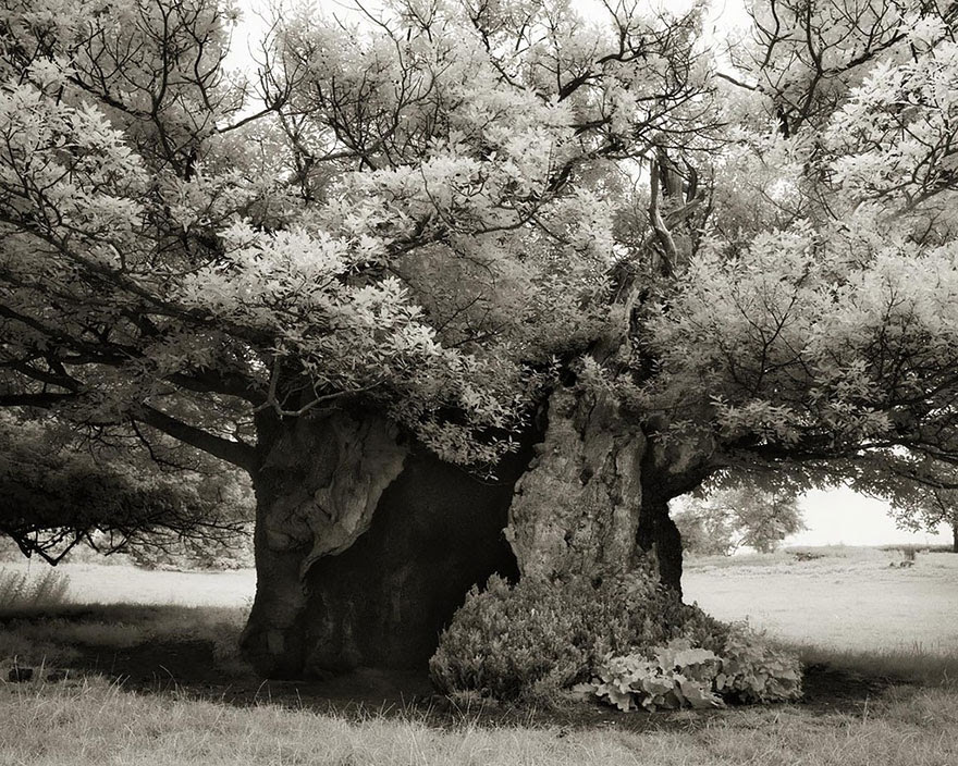 arboles-antiguos-beth-moon2
