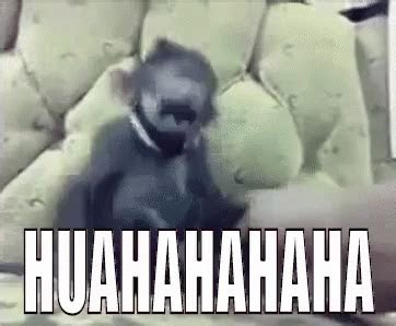 huahahaha gif tertawaterbahak monyet tertawa discover