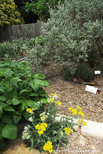 Vegetables and native perennials