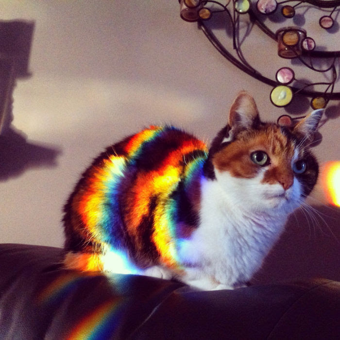 My Sister's Calico, Minnie Enjoying The Colourful Evening Sun