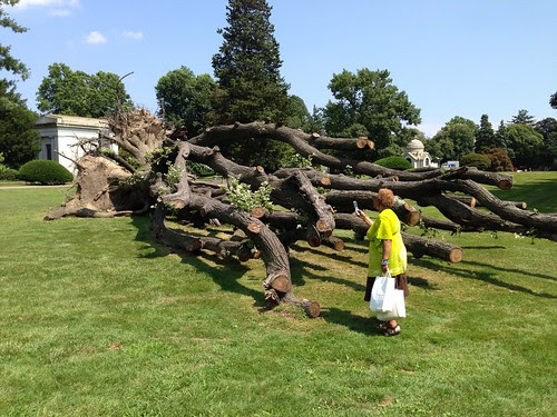 The huge felled tree, Woodlawn Cemetary, Bronx