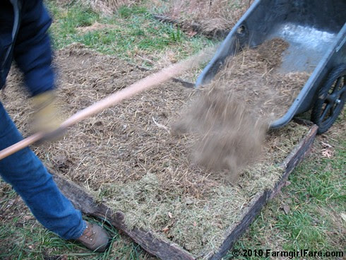 Mulching the garlic bed in the kitchen garden on 11-13-10
