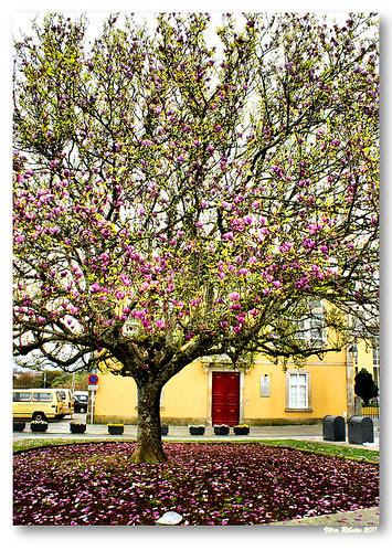 A tree by VRfoto