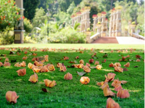 Indah dan cantiknya Taman Seribu Bunga yang berguguran