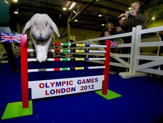 Ολυμπιακοί αγώνες για κουνέλια (9)