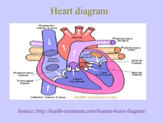 heart diagram 8 638